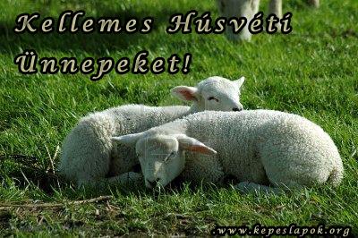 húsvéti bárányok kepeslap