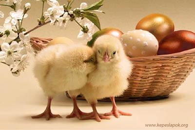 csibék húsvéti képeslap