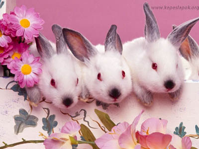 nyulak húsvéti képeslapok