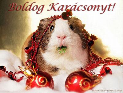 boldog karácsonyt hörcsög képeslapok