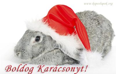 boldog karácsonyt nyuszi képeslapok