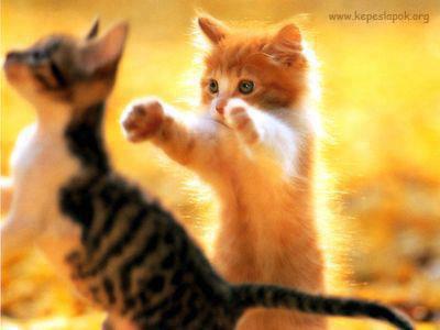 aranyos cica képeslap