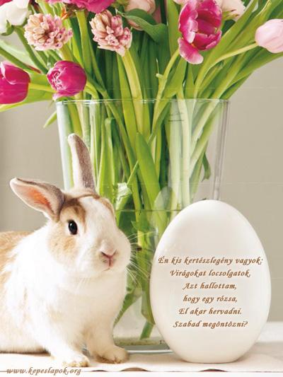 kiscsibe húsvéti képeslapok