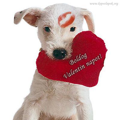 valentin napi képeslap kutya