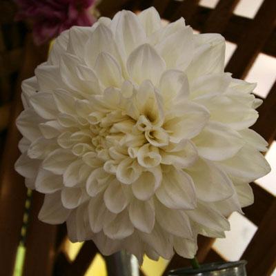 fehér virág képeslap